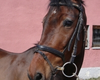 HOSTEL  (Viscount  x Hostella)